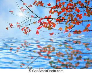feuilles automne, refléter, dans eau