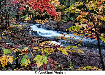 feuilles automne, rivière, coloré, encadré