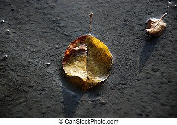 feuilles automne, sur, a, frais, préparé, c