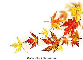 feuilles automne, sur, blanc