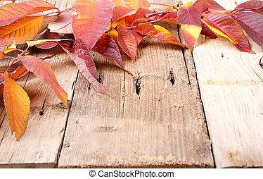 feuilles automne, sur, planche bois