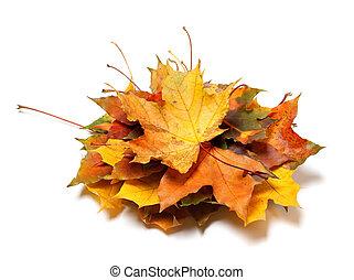 feuilles automne, tas, érable