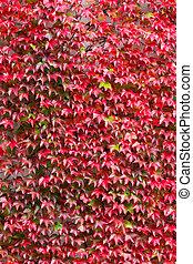 feuilles, automne, toile de fond, fond, automne, rouges