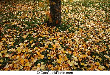 feuilles automne, tomber, terrestre