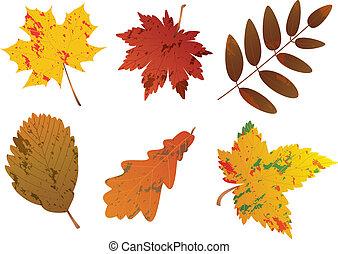 feuilles automne, vecteur, ensemble