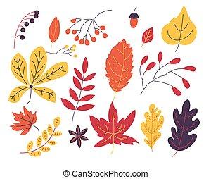 feuilles automne, vecteur, illustration, collection