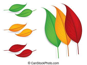 feuilles automne, vecteur, -, illustration