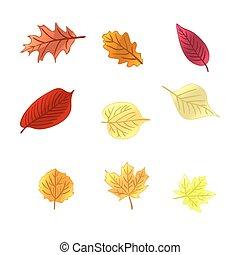feuilles automne, vecteur, set.