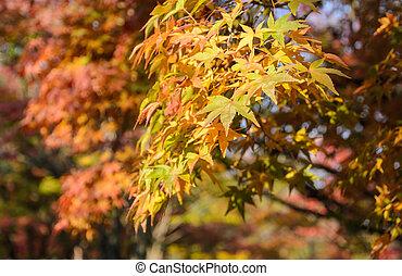 feuilles, automne, vert, érable, fond, rouges