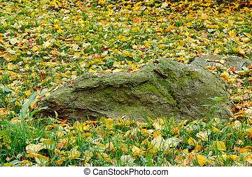 feuilles, automne, vert, automne, orange, rouges, terrestre