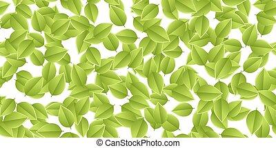 feuilles automne, vert