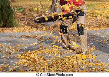 feuilles automne, voler, allée
