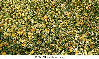 feuilles, baissé, automne