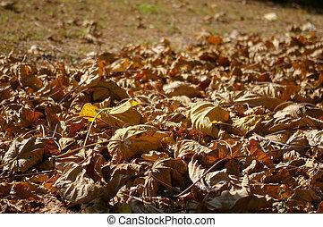 feuilles, baissé, fond
