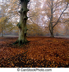 feuilles, baissé, forêt