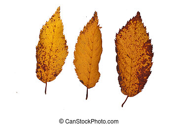 feuilles, baissé, trois