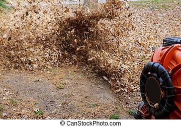 feuilles, balais, nettoyage, automne, territoire