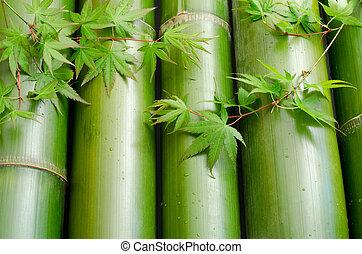 feuilles, bambou, érable