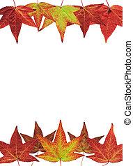 feuilles, blanc, automne