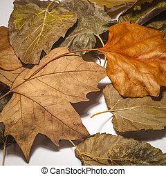 feuilles, blanc, coloré