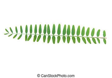 feuilles, blanc vert