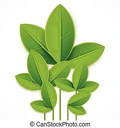 feuilles, blanc vert, branche