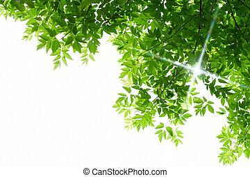 feuilles, blanc vert, fond