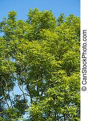 feuilles bleu, ciel, contre