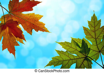 feuilles bleu, ciel, couleurs, automne, mélangé, érable