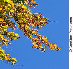 feuilles bleu, ciel, jaune, automne, contre