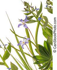 feuilles bleu, fleurs, délicat
