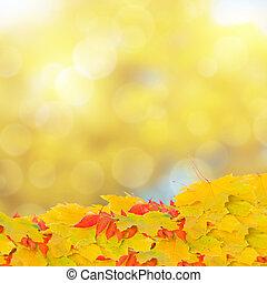 feuilles, bokeh, fond, automne