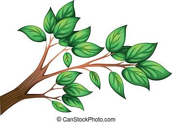 feuilles, branche arbre