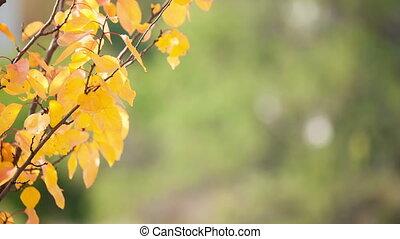 feuilles, branche, jaune