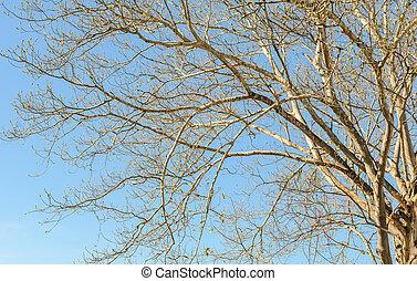 feuilles, branches, bleu ciel, arbre, sans