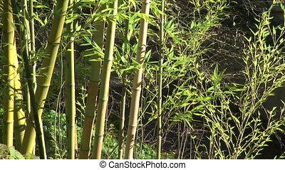 feuilles, brise, bambou, mouvementde va-et-vient