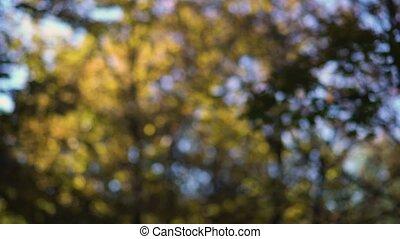 feuilles, brouillé, vent, arbres, mouvementde va-et-vient