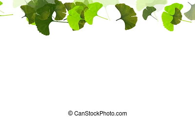 feuilles, bulba, ginko, tomber