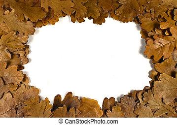 feuilles, cadre, fond blanc