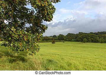 feuilles, campagne, dorset