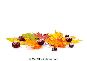 feuilles, châtaignes, automne