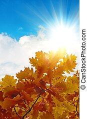 feuilles, chêne, automne