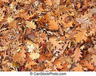 feuilles, chêne, fond, automne