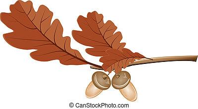 feuilles chêne, glands