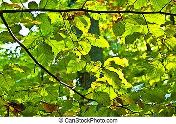feuilles, chêne, harmonie