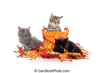 feuilles, chatons, trois, automne