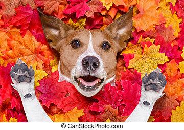 feuilles, chien, automne, autmn, surpris