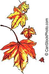 feuilles chute, érable
