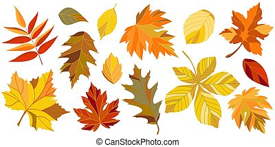 feuilles, collection, automne