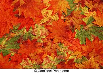 feuilles, coloré, automne